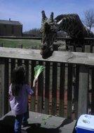 rsz_abbie_feeding_giraffes